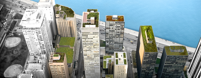 Green Roof Header