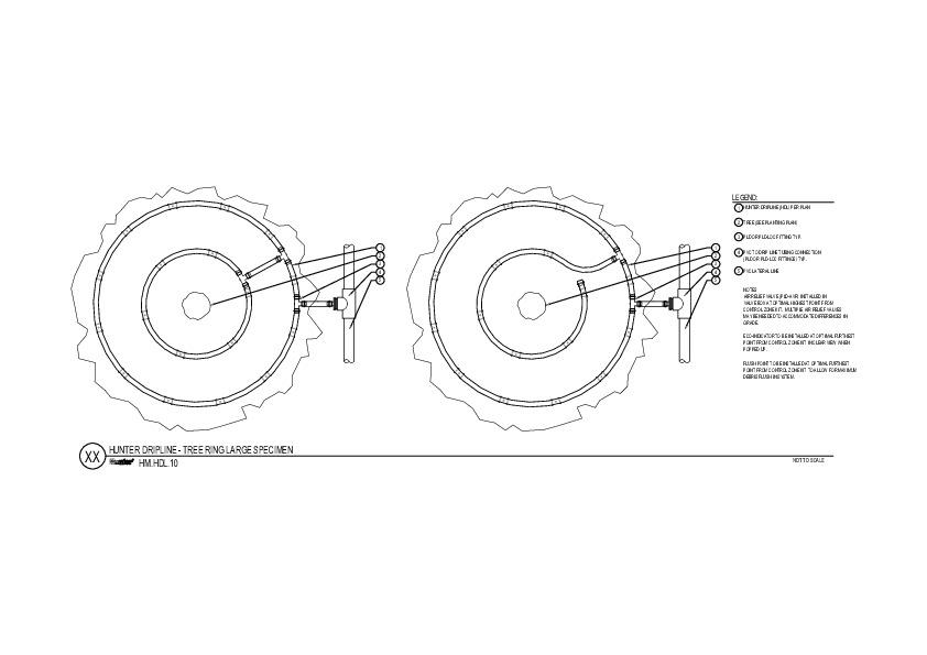 HDL - Tree Ring Large Specimen
