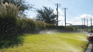 Poor Irrigation Practices with Run-Off