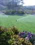 Sprinklers Running on Lawn