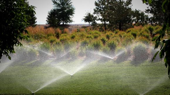 PS Ultra Spray Sprinkler Heads for Landscapes