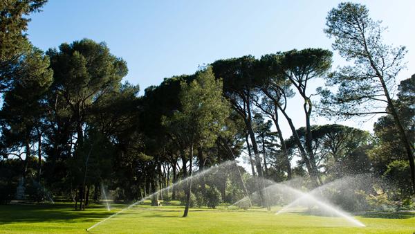 Rotor Irrigation Near Trees