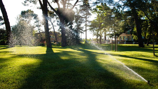 Irrigation Rotor
